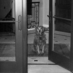 La maison est votre territoire pas celui du chien for Alimentation chien maison