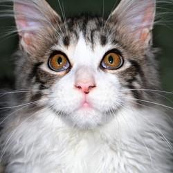 maladies vieillesse chat