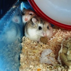 mangeoire abreuvoir hamster