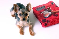 le mat riel de toilettage pour chien toilettage du chien wamiz. Black Bedroom Furniture Sets. Home Design Ideas