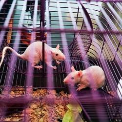 nid de la souris