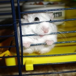 ou placer cage hamster