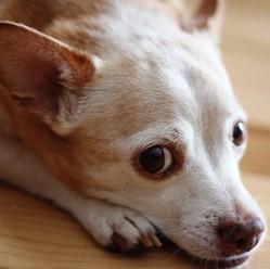 remèdes naturels parasites intestinaux chiens