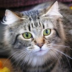 Pathologies de l'appareil reproducteur du chat