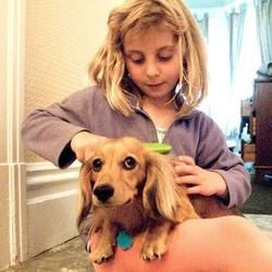 peigne chien