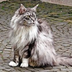 Pension pour chat et solutions de garde