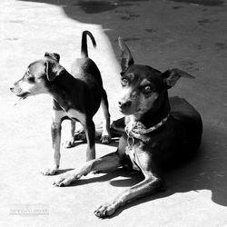 pension pour chien