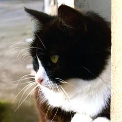 posture oreilles chat