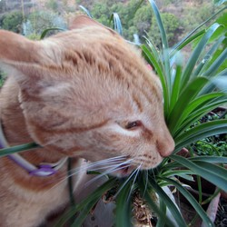 pourquoi chat machonne plante