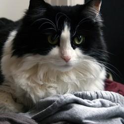 pourquoi chat machonne tissus