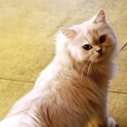 Pourquoi stériliser les chats