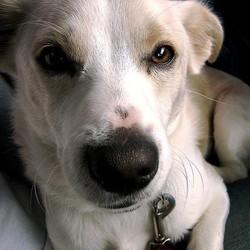 prévenir les maladie du chien par son alimentation les proportions et les aliments