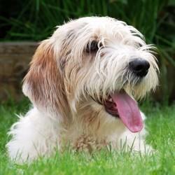 prévenir les maladie du chien hygiène