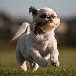 prévenir les maladies du chien par une bonne alimentation