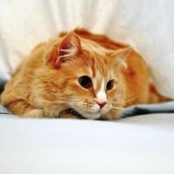 principaux symptomes chat