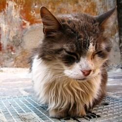 problèmes os chats