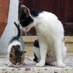 problème comportement maternel chat