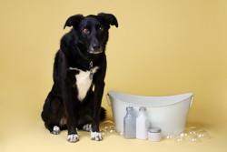 produit toilettage chien