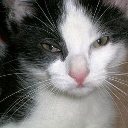 propreté chat stressé