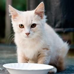 quand doit manger chat