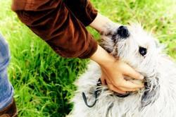 recompenser son chien