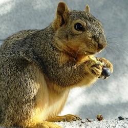 repas ecureuil
