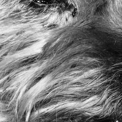 robe du chien poils du chien