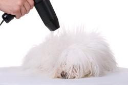 sechage chien