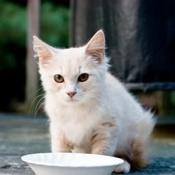 règles alimentation du chat