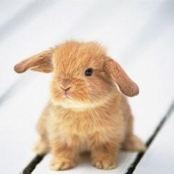 le sevrage des bébés lapins