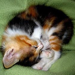 sommeil chaton