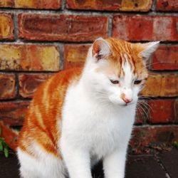 chat teigne