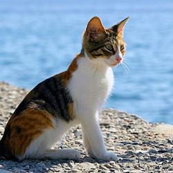 vacances avec chat