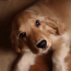 vaccin du chien les maladies contre lesuqelles ils protègent