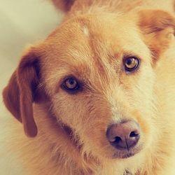 Vaccin pour chien - Dog's Fashion 45