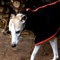 vetements pour chien manteau