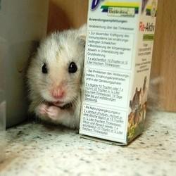 vitamines mineraux hamster
