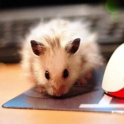 voyager avec son hamster