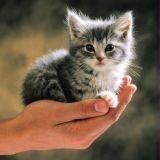 Lycat