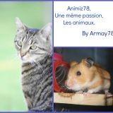Armay78