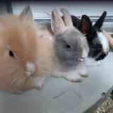 Bunnyfamily_