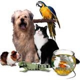Pet Sitter 68
