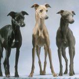 Dogpassion89