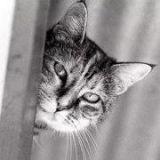 Le Chat Photographe