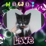 Love The Cat