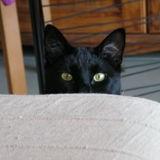 Howtocat