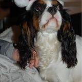 Jasminedog