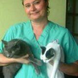 Job-Asv, Auxiliaire Vétérinaire