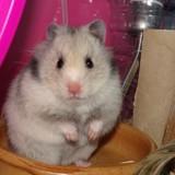 Litchi_hamster