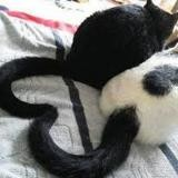 Lulucatsdogs